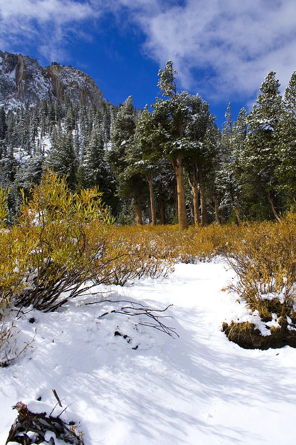 Snow Photograph - Autumn Snow by Chris Brannen