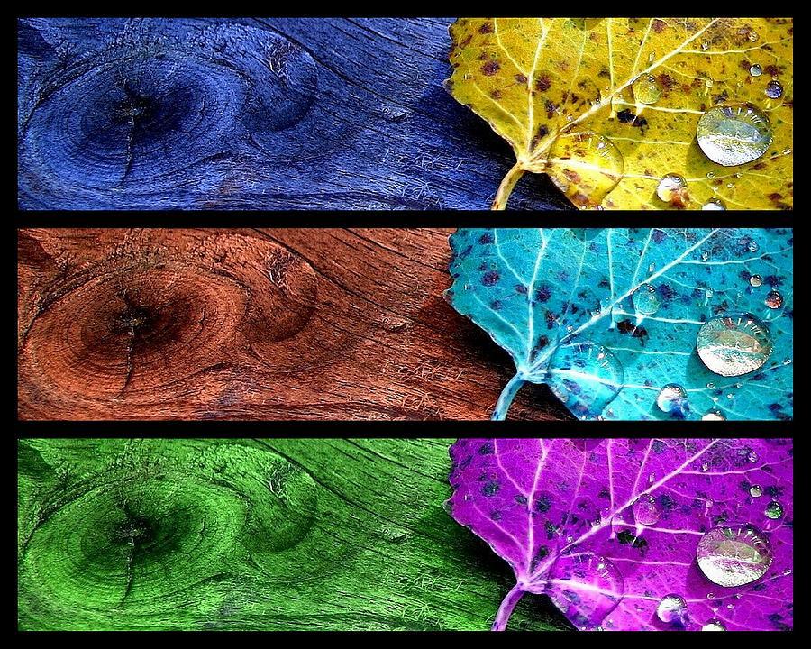 Colour Photograph - Autumn Spirits by Bianca Van Heumen