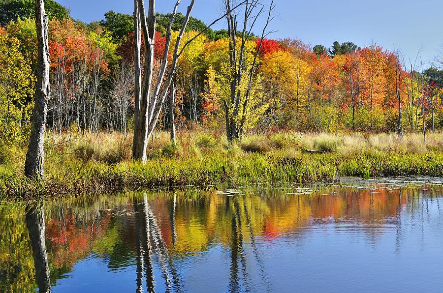 Autumn Photograph - Autumn Splendor - Bolton Flats by Luke Moore