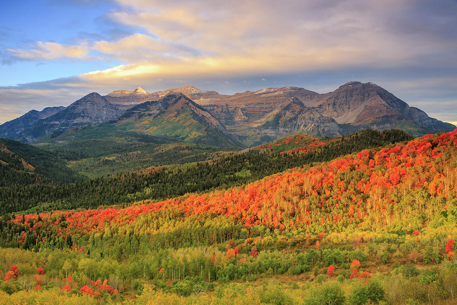 Autumn splendor in the Wasatch Back. by Johnny Adolphson