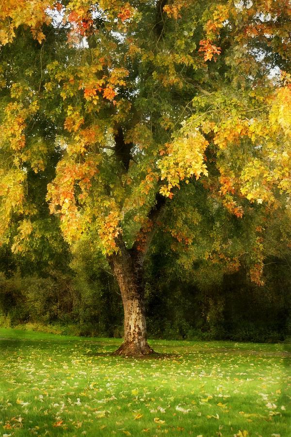 Autumn Leaves Photograph - Autumn Splendor by Patricia Strand