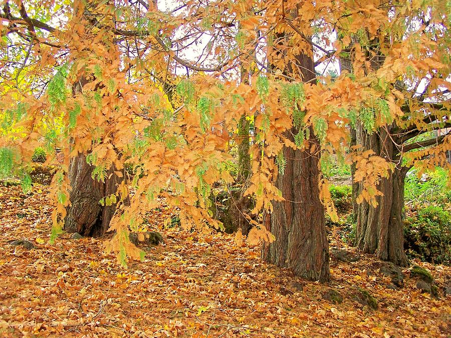Trees Photograph - Autumn Splendor by Terry Jones