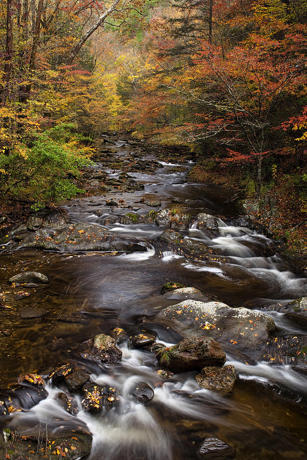Smoky Photograph - Autumn Stream by Andrew Soundarajan