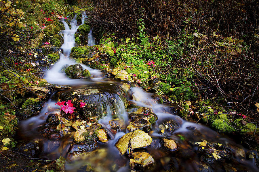Nature Photograph - Autumn Stream by Chad Dutson