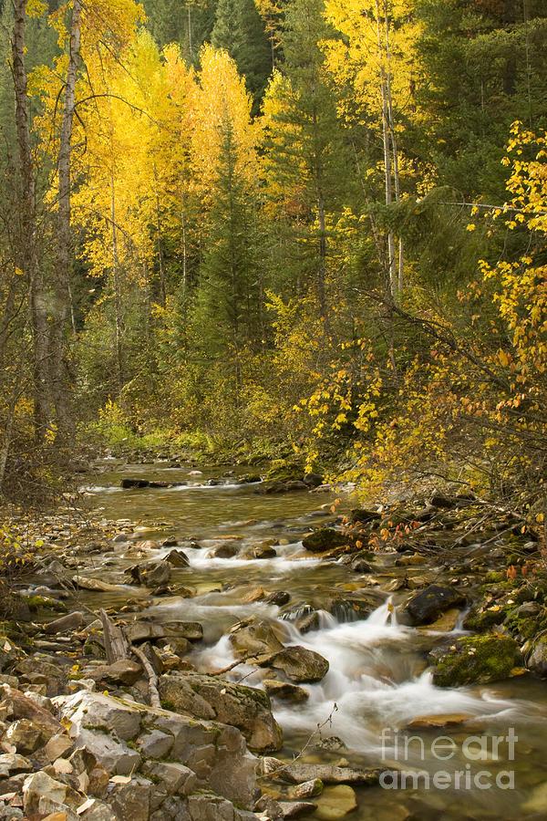Idaho Photograph - Autumn Stream by Idaho Scenic Images Linda Lantzy