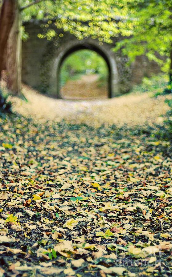 Autumn Photograph - Autumn Stroll by Meirion Matthias