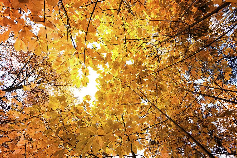 Autumn Sun Photograph