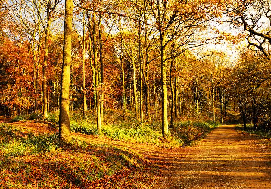Autumn Photograph - Autumn by Svetlana Sewell