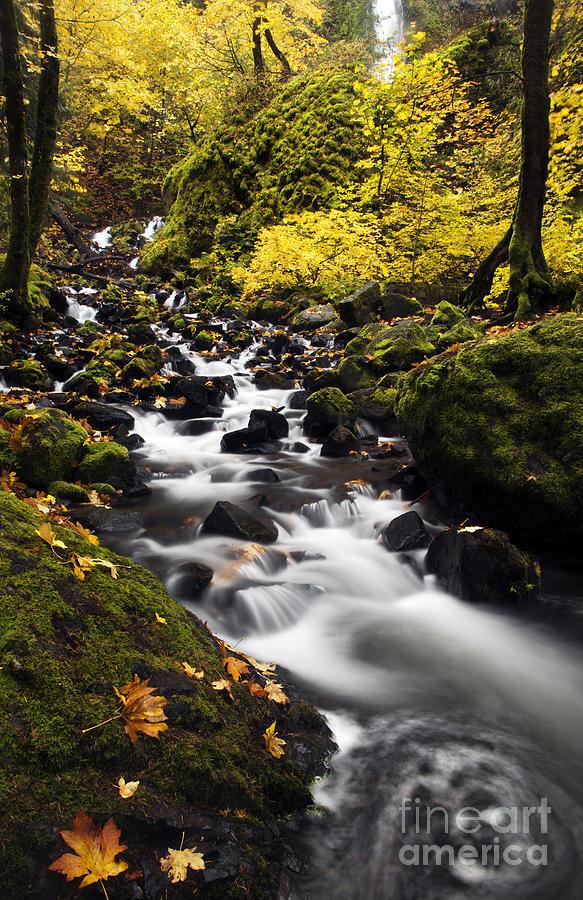 Starvation Creek Photograph - Autumn Swirl by Mike  Dawson