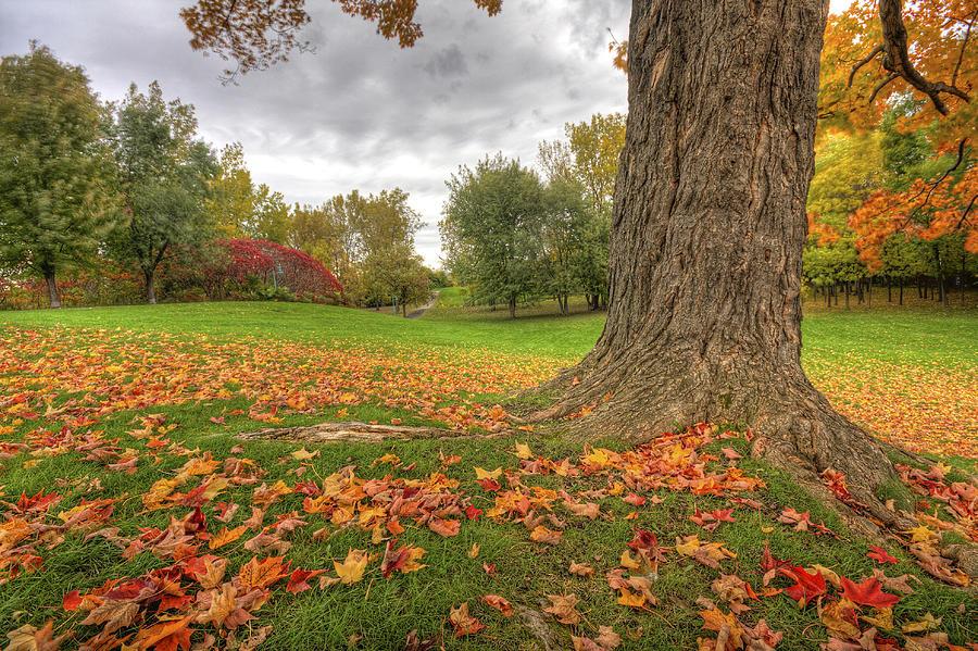 Autumn Photograph - Autumn Tale by Mircea Costina Photography