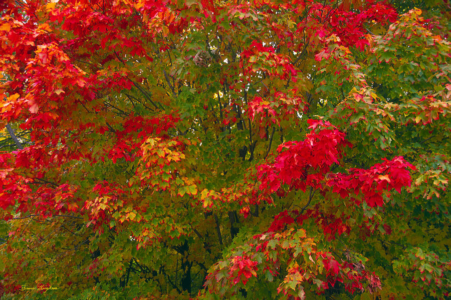 Maple Photograph - Autumn Tapestry by Bruce Thompson