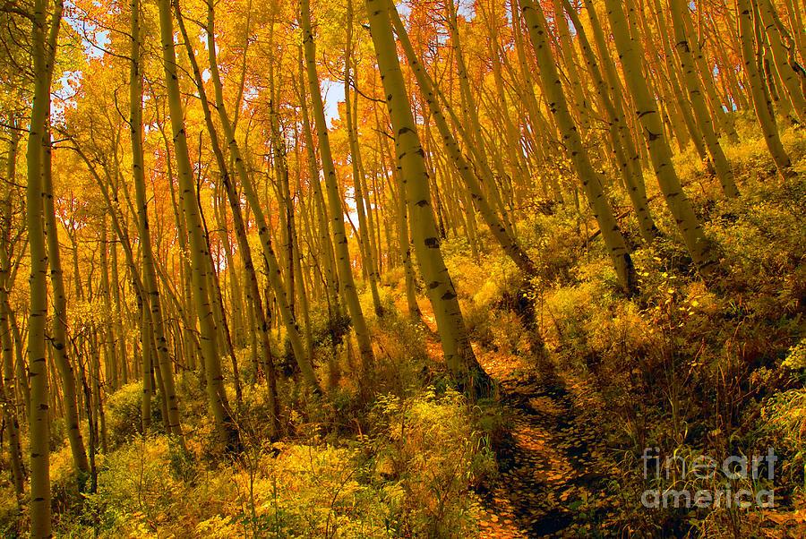 Autumn Photograph - Autumn Trail by David Lee Thompson