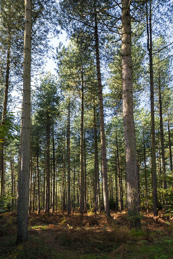 Forest Photograph - Autumn Tranquil Forest by Gillian Dernie