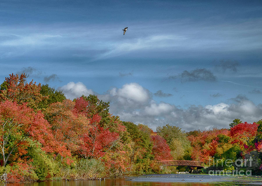 Autumn Photograph - Autumn Tranquility by Judy Hall-Folde