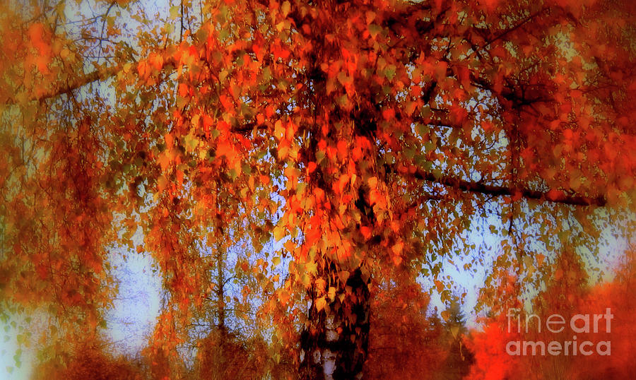 Autumn Tree in Switzerland by Susanne Van Hulst