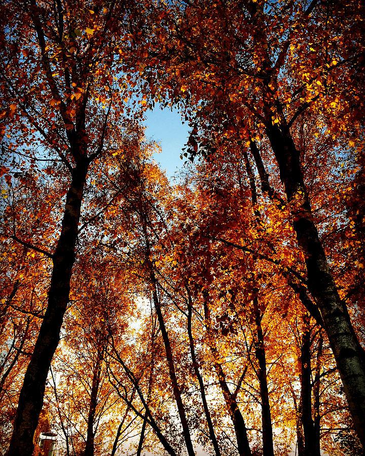 Autumn Photograph - Autumn Tree by Niki Mastromonaco