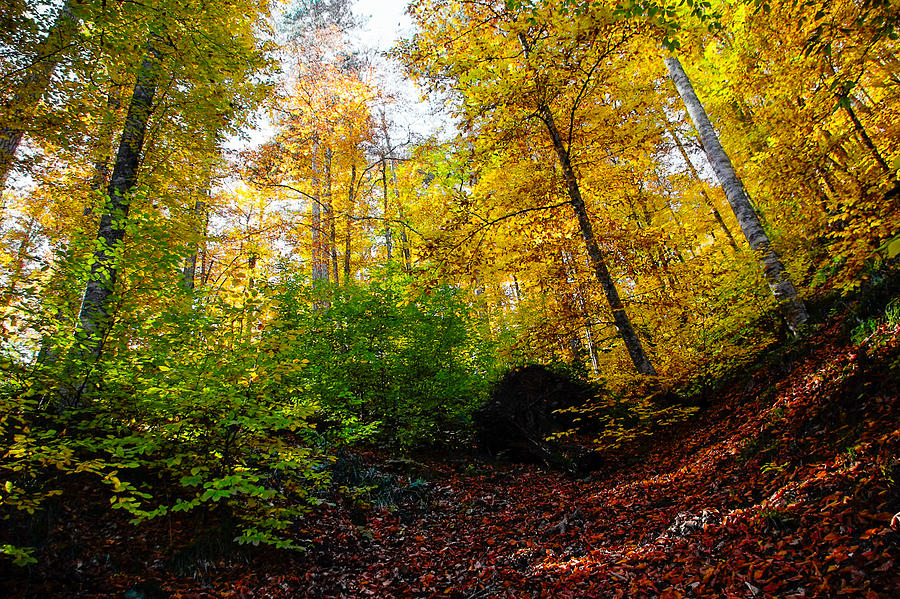 Autumn Photograph - Autumn Trees at The Forest by Freepassenger By Ozzy CG