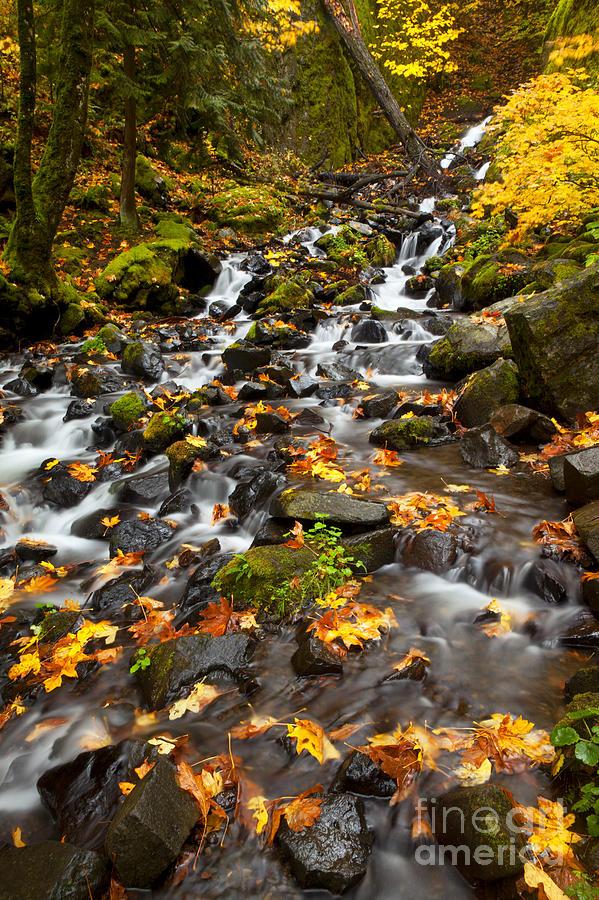 Starvation Creek Photograph - Autumn Tumbles Down by Mike  Dawson