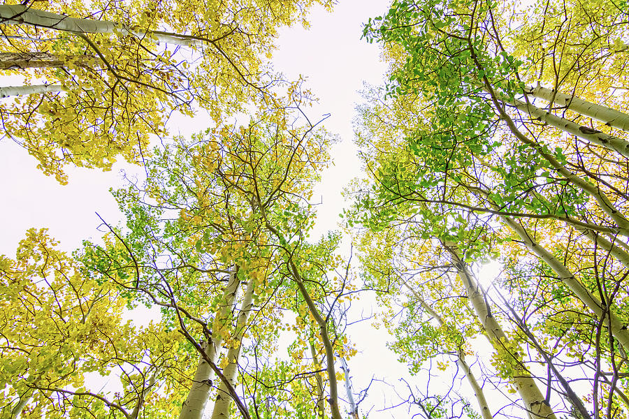 Autumn Turning Photograph