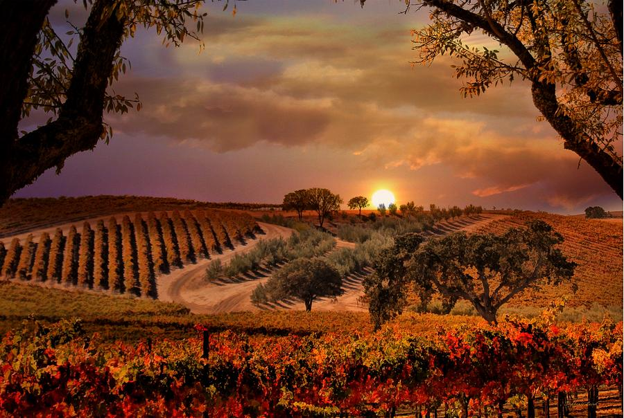 Wine Photograph - Autumn Vineyard by Stephanie Laird