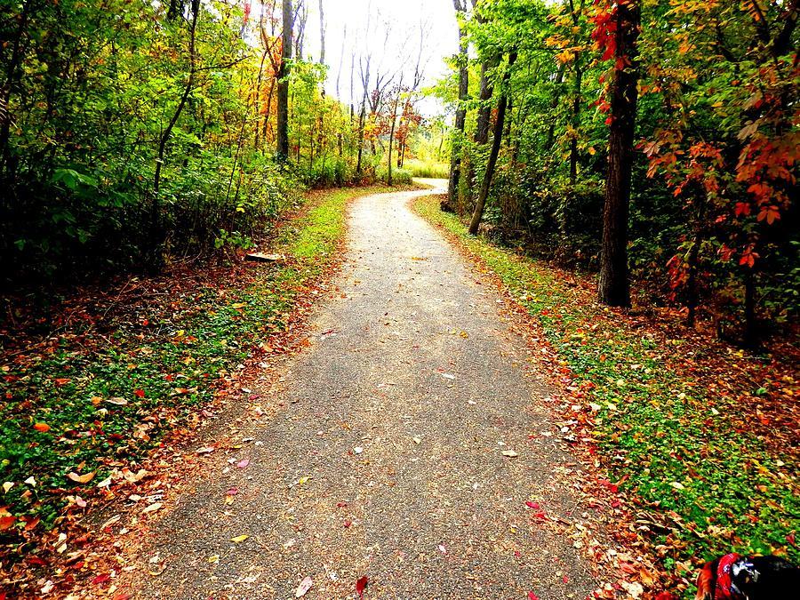 Fall Photograph - Autumn Walk by Deborah Kunesh