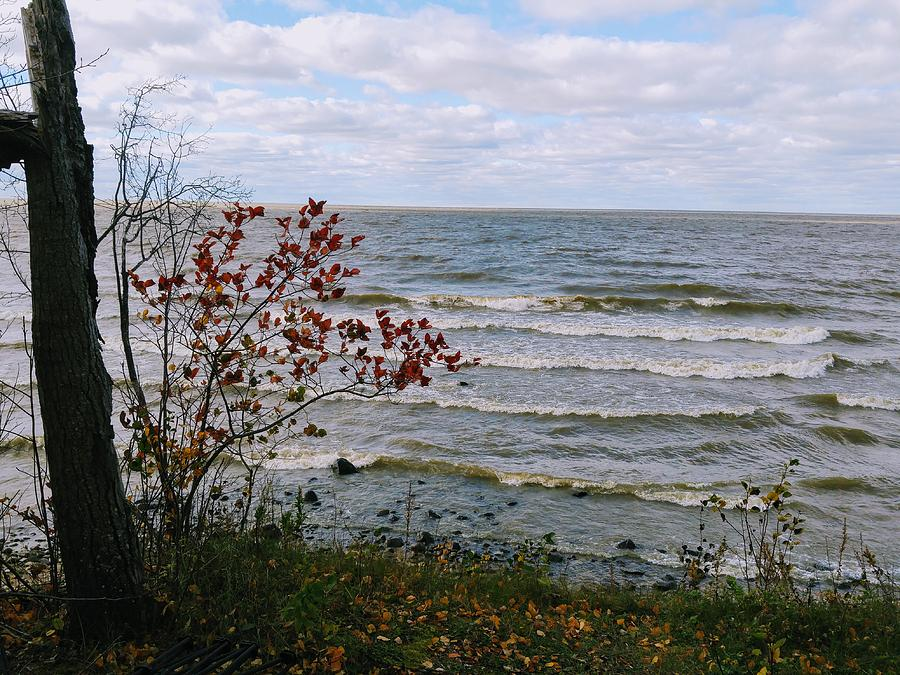 Autumn Waves by Sharilee Swaity