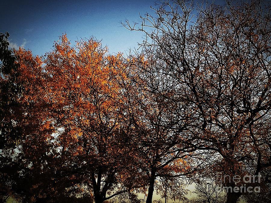 America Photograph - Autumn Wind by Frank J Casella