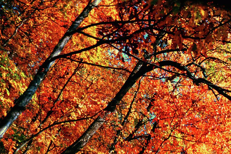 Autumn Leaves Photograph - Autumn Wonder by Gary Wonning