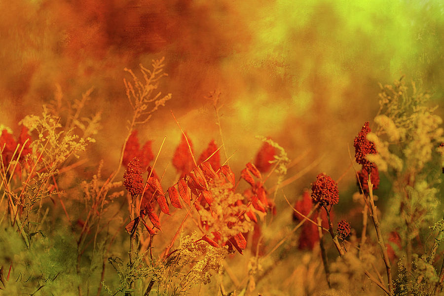 Autumn Wonders Digital Art