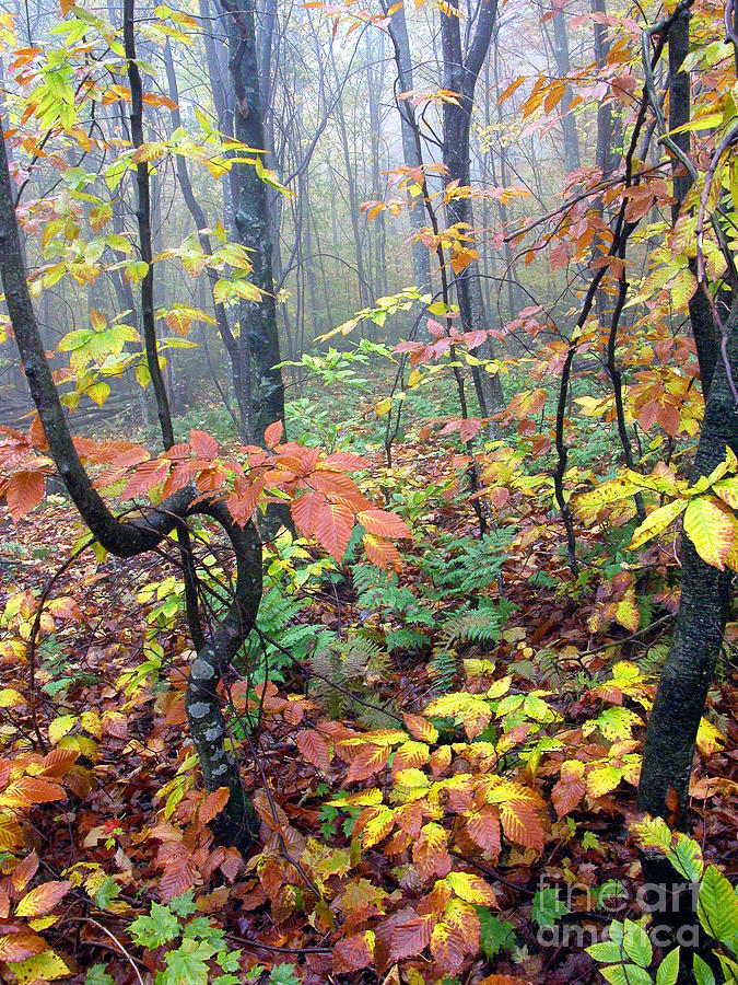 West Virginia Photograph - Autumn Woodland by Thomas R Fletcher