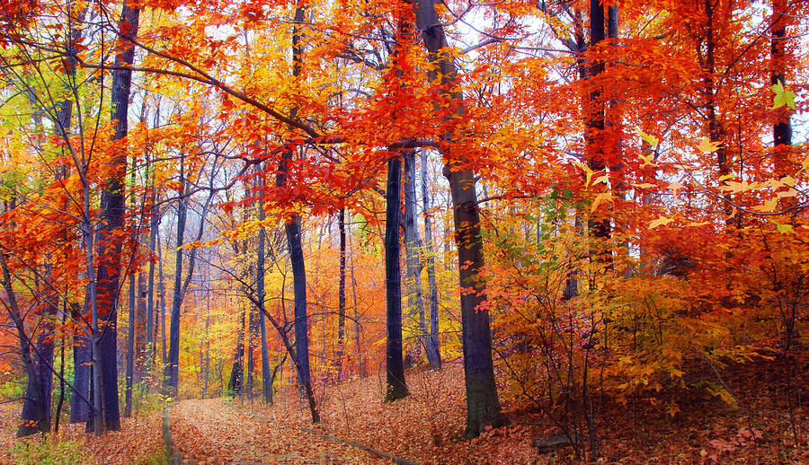 Autumn Woodland Trail Photograph