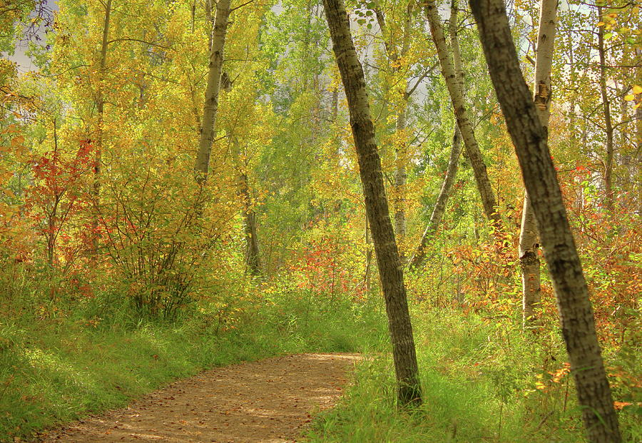 Autumn Woodlands by Jim Sauchyn