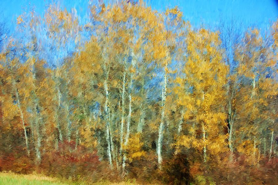 Autumn Woodlot Photograph by David Lane