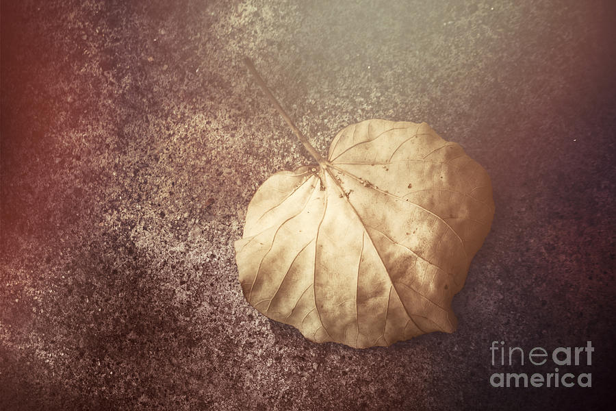 Autumn Photograph - Autumnal Changes by Jorgo Photography - Wall Art Gallery