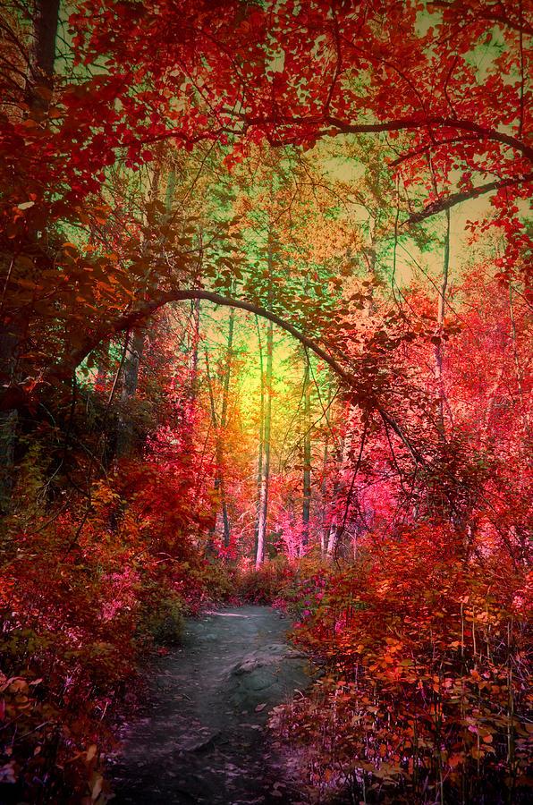 Tree Photograph - Autumns Archway by Tara Turner