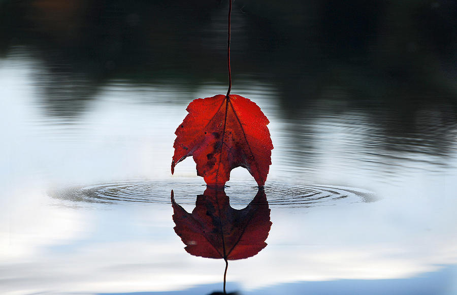Autumn Photograph - Autumns Final Descent by William Carroll