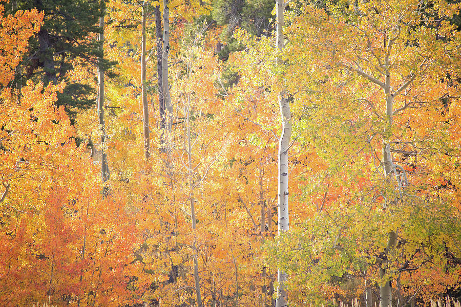 Autumn's Grand Display by Diane Mintle