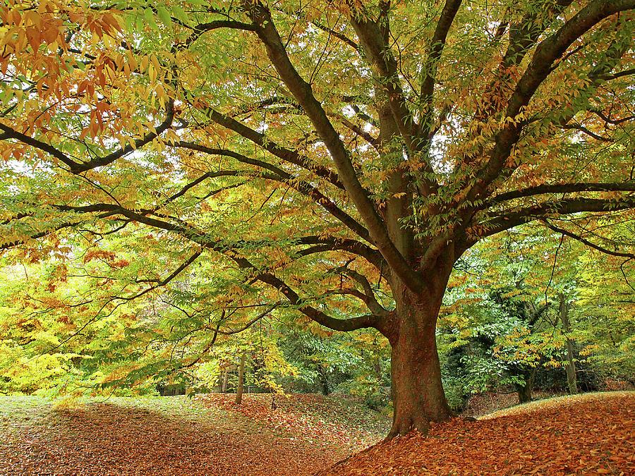 Autumn's Majesty by Gill Billington