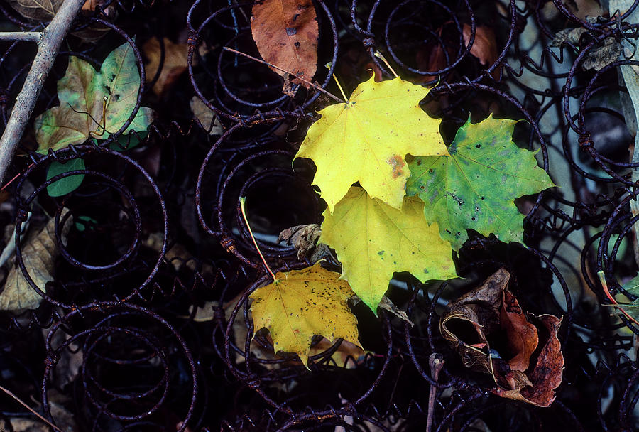 Autumn's Spring Leaves, Horizontal by James Oppenheim