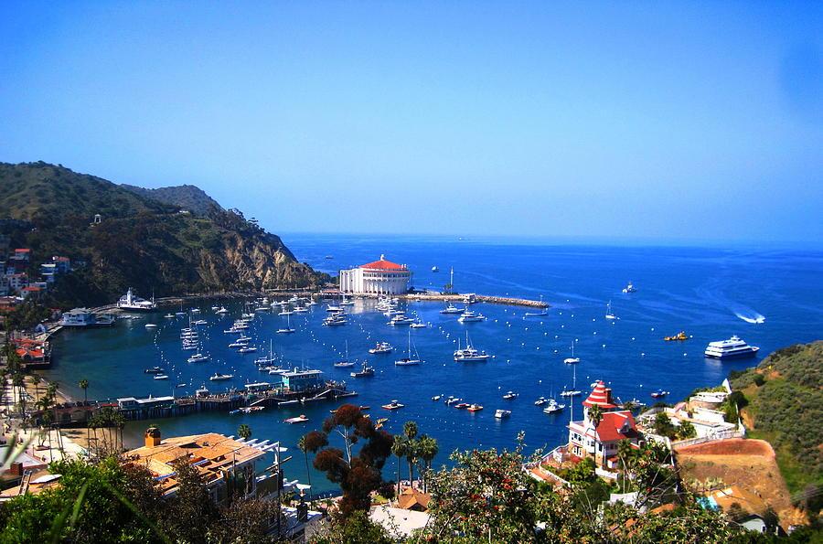 Catalina Photograph - Avalon Harbor At Catalina by Catherine Natalia  Roche