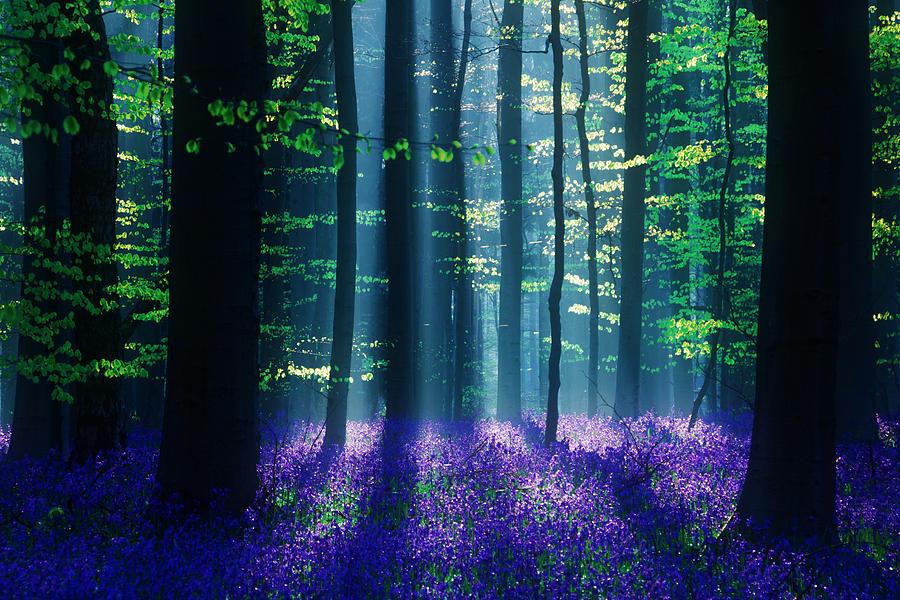 Landscape Photograph - Avatar by Martin Podt