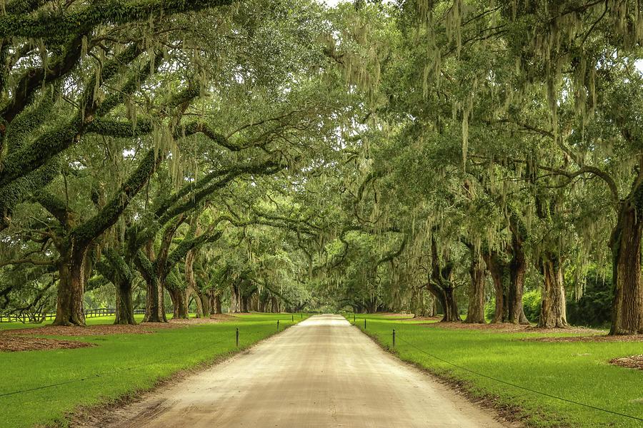 Live Oak Photograph - Avenue Of The Oaks by Dana Foreman