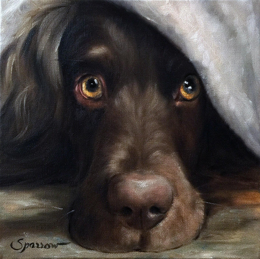 Boykin Spaniel Painting - Avery Under Cover by Mary Sparrow