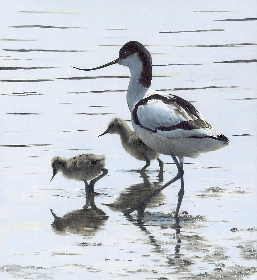 Avocet Painting - Avocet And Chicks by Clive Meredith