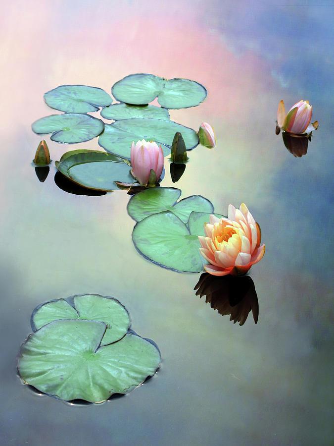 Botanical Photograph - Awaken by Jessica Jenney