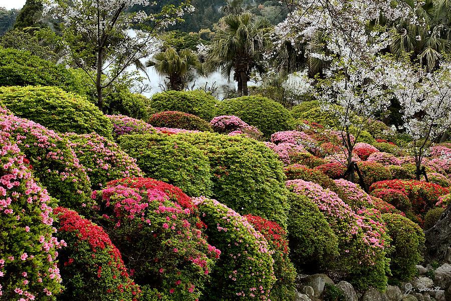azalea photograph azalea bush garden by joe bonita - Bush Garden
