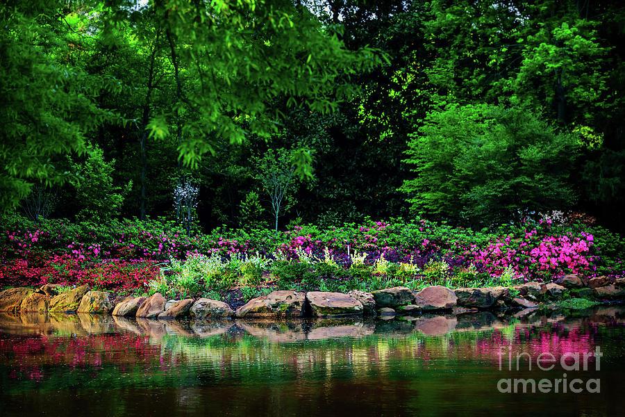 Tamyra Photograph - Azalea Pond by Tamyra Ayles