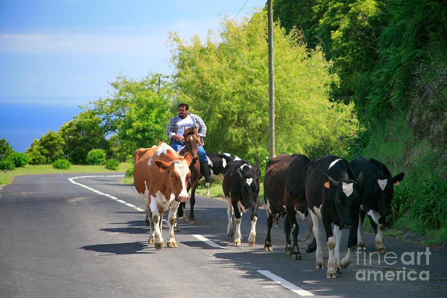 Agriculture Photograph - Azorean Farmer by Gaspar Avila