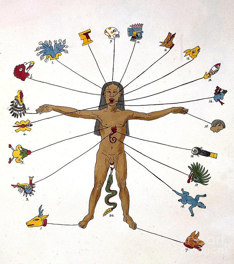Aztec Zodiac Man, Medical Astrology