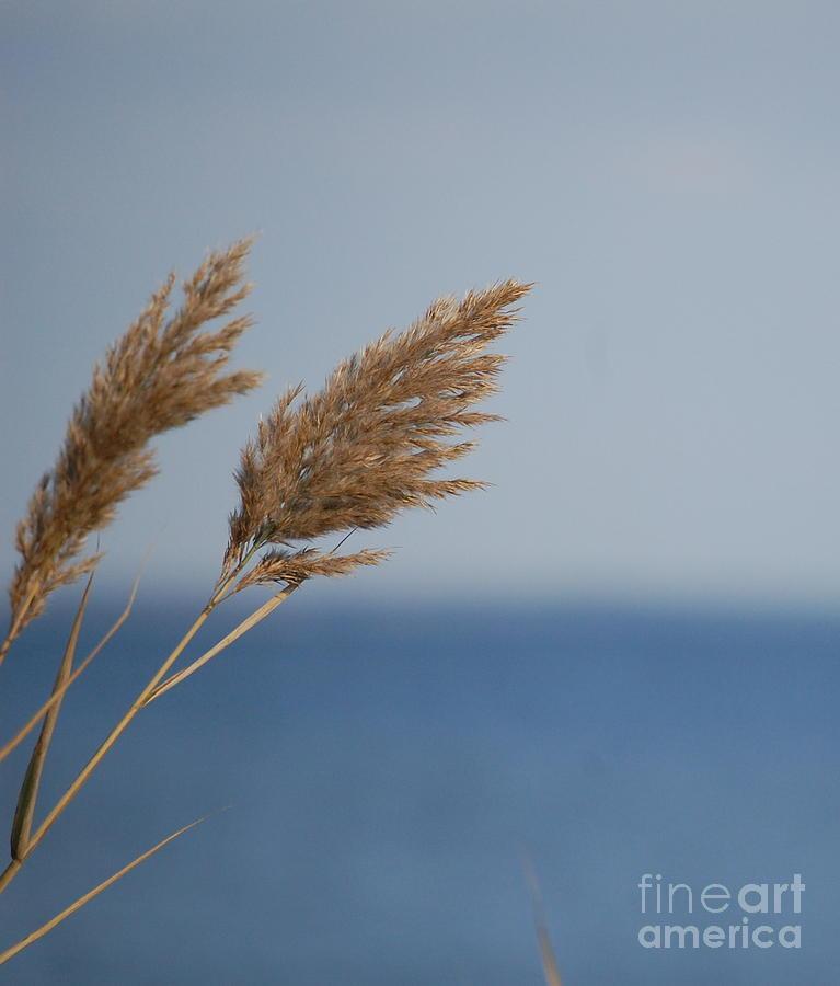 Azure by Waverley Manson